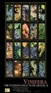 Wine Poster, Vinifera wine grape education cards,wine posters,wine calendars and wine guides for wine tasting and wine education.