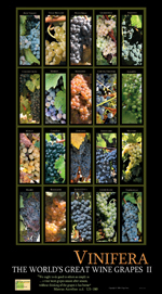 Wine cards, wine calendars, wine guides for wine tasting and wine education,ghigo press