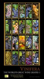 Wine cards, wine calendars, wine guides for wine tasting and wine education.,ghigo press
